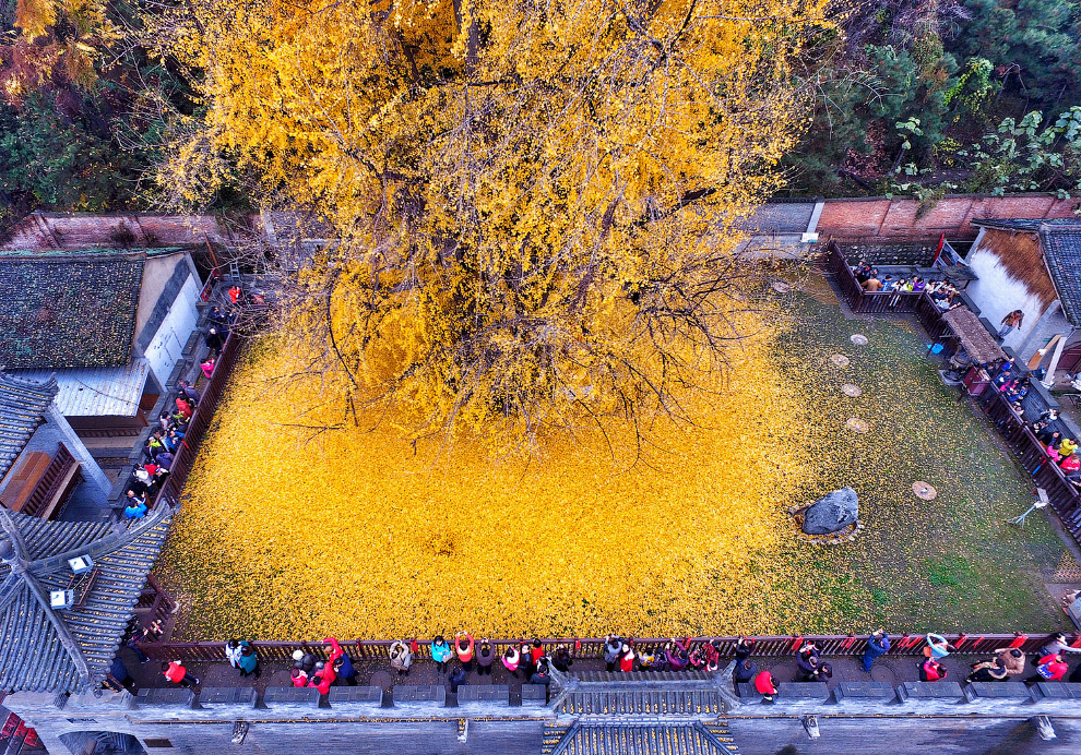Красивый листопад в провинции Шэньси, Китай