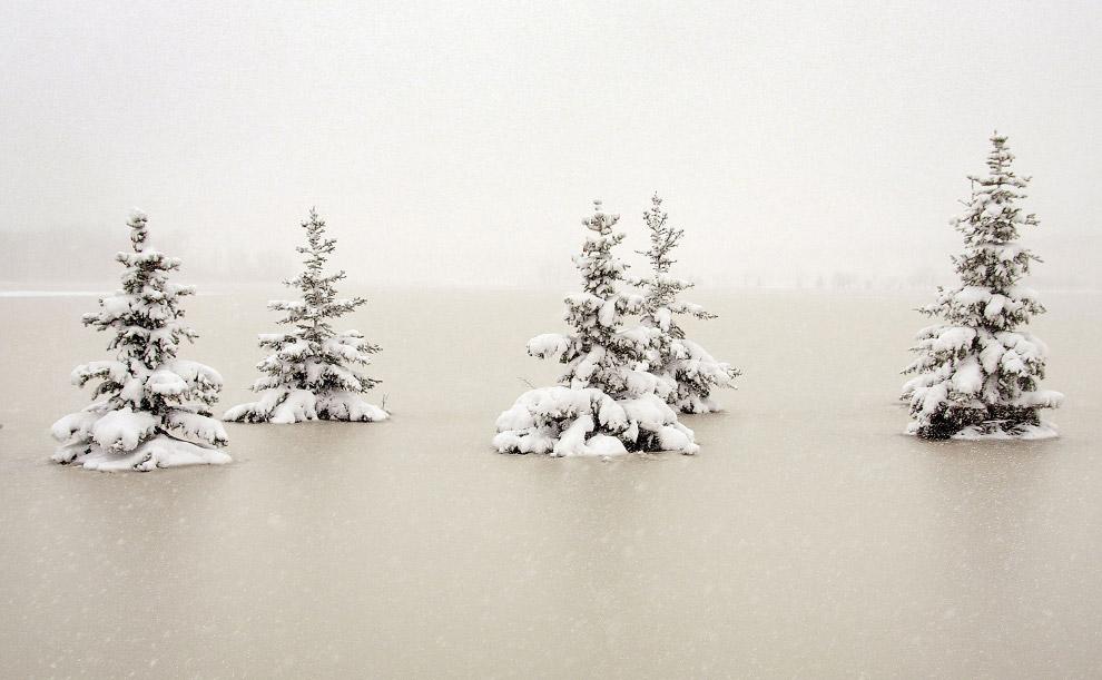 А в Миннесоте опять снег