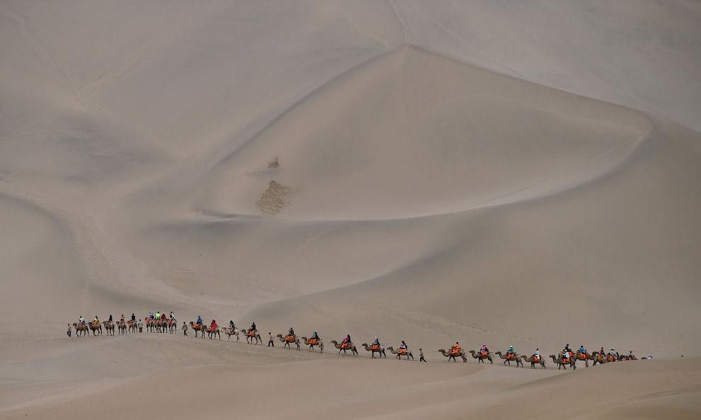 Караван верблюдов в пустыне в Дуньхуане, Китай