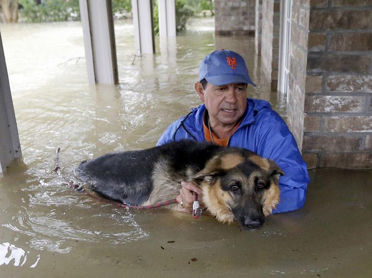 Спасение собак от урагана «Харви
