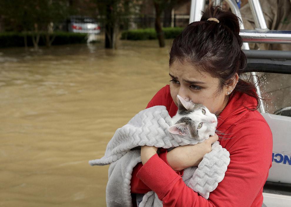 Спасение собак от урагана «Харви»Спасение собак от урагана «Харви»