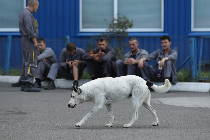 Четвероногий житель зоны отчуждения Чернобыльской АЭС