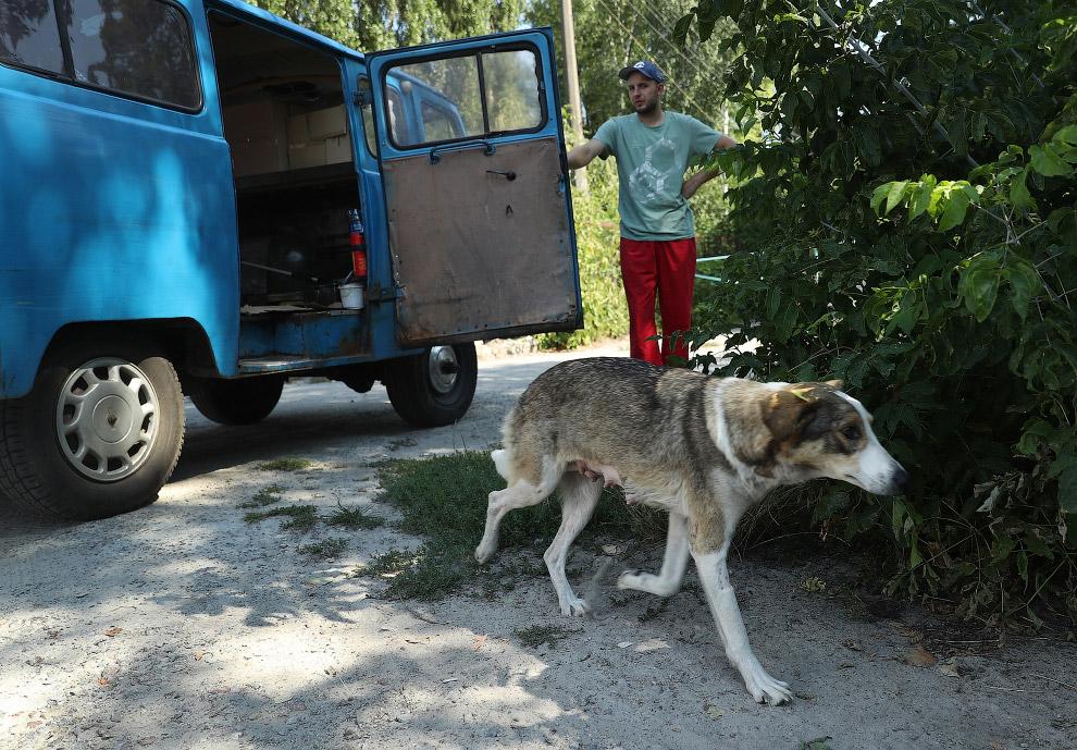 Бродячие собаки Чернобыля