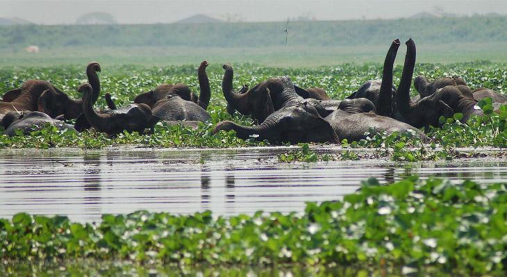 Слоны любят воду
