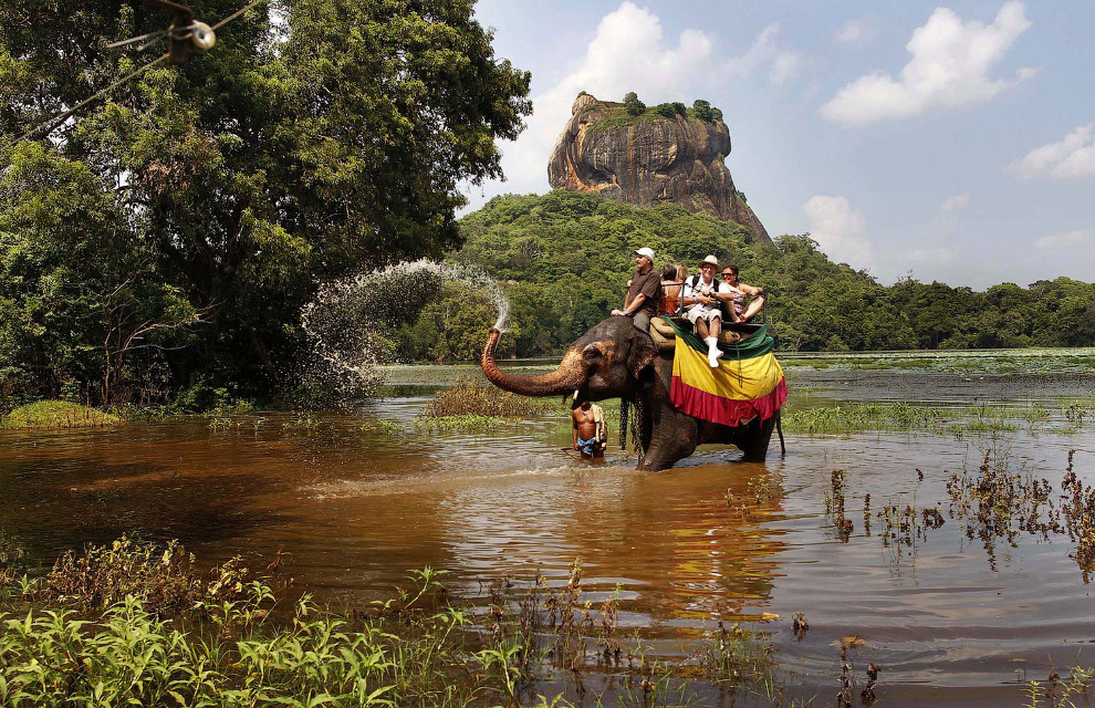 «Туристический слон» в Шри-Ланке