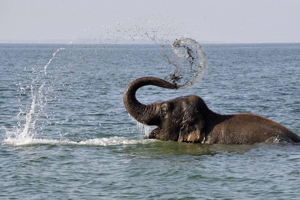 Слон на пляже Беллерир недалеко от Лозанны, Швейцария