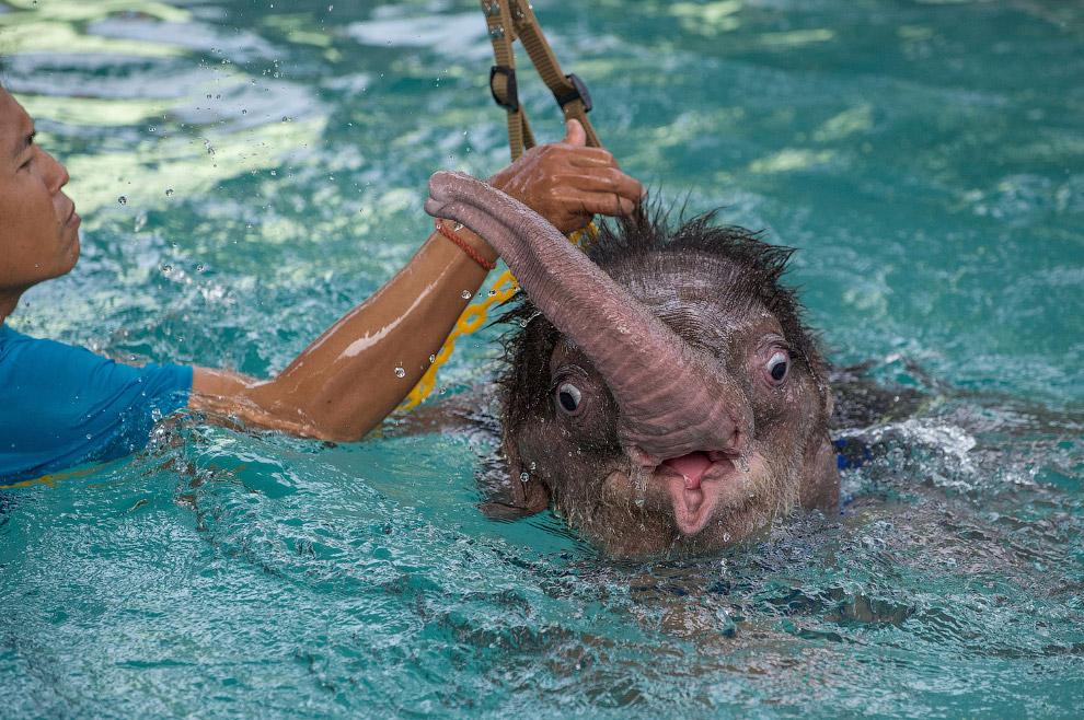 6-месячный слоненок по имени «Ясное небо» в реабилитационном центре недалеко от Бангкока