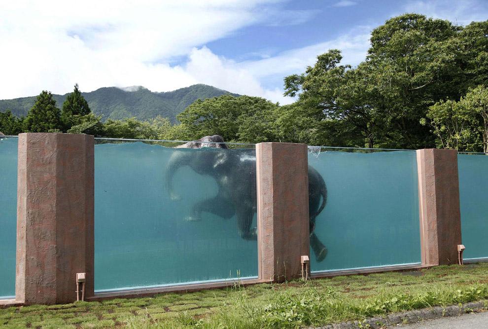 И снова плавающий слон в 65-метровом бассейне недалеко от Токио
