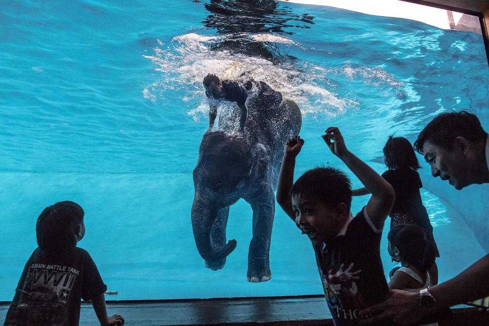 Слон в зоопарке под Бангкоком