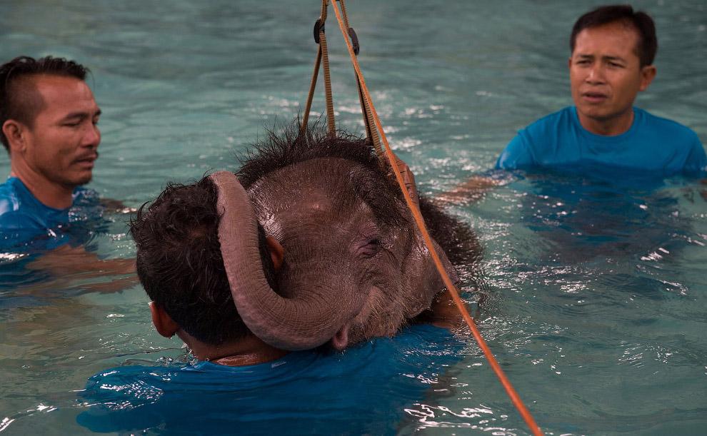 Каждый год 12 августа отмечается Всемирный день слонов