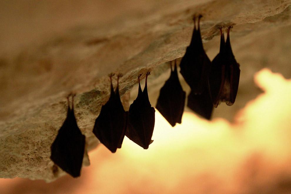 Знаменитые пещерные жители — летучие мыши в пещере в Микулове