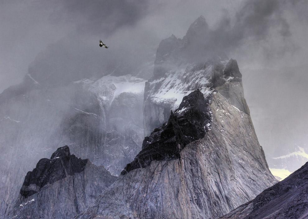 Андский кондор над горами в национальном парке Торрес-дель-Пайне, Чили.