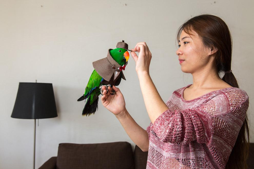 Благородный зелёно-красный попугай[