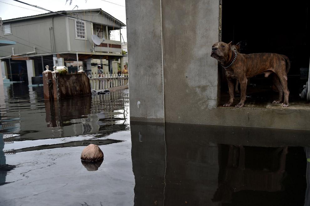 «Страна полностью разрушена»: ураган Ирма