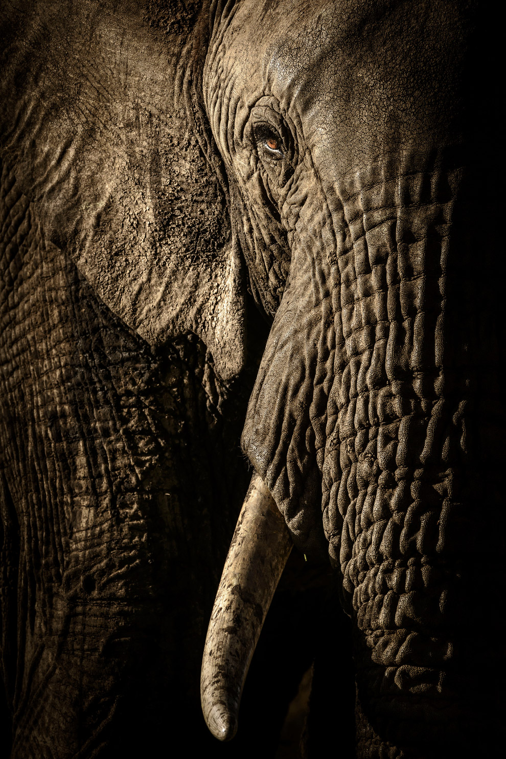 Взгляд слона