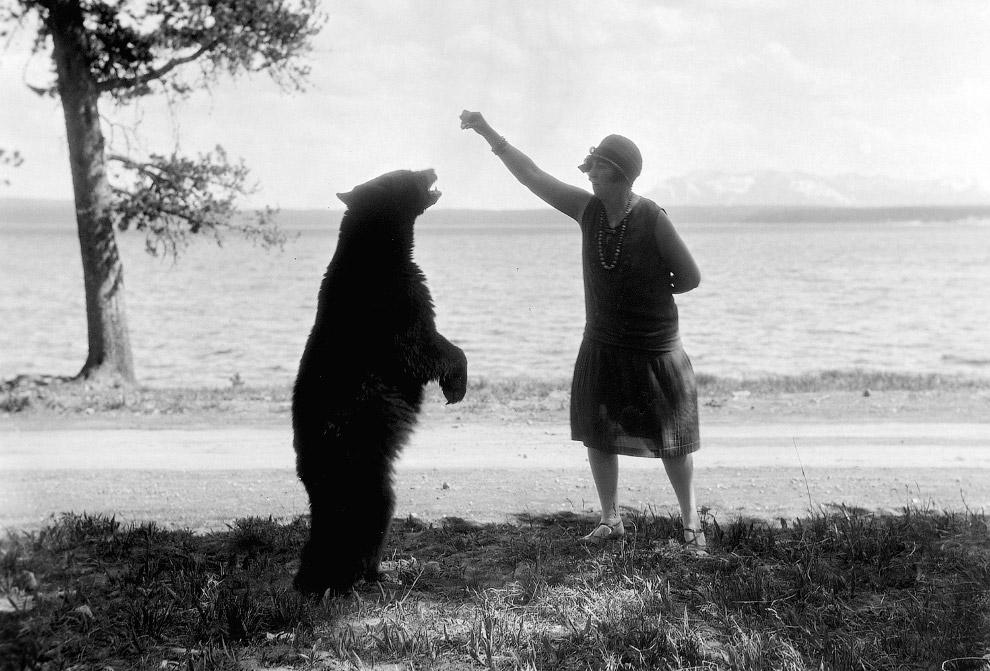 Медведь и туристка