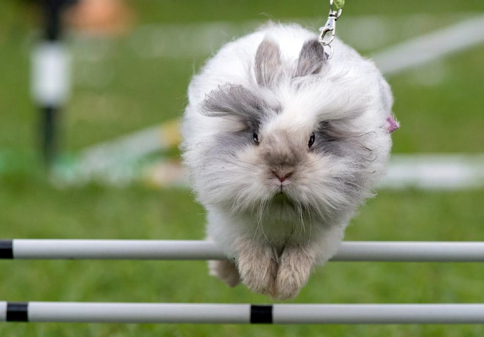 Соревнования по кроличьим бегам в Германии