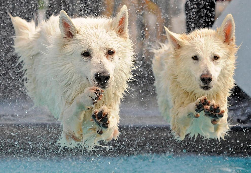 Соревнования по дайвингу собак на Международной выставке домашних животных в Германии