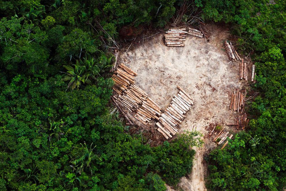 Незаконная вырубка в дождевых лесах Амазонии