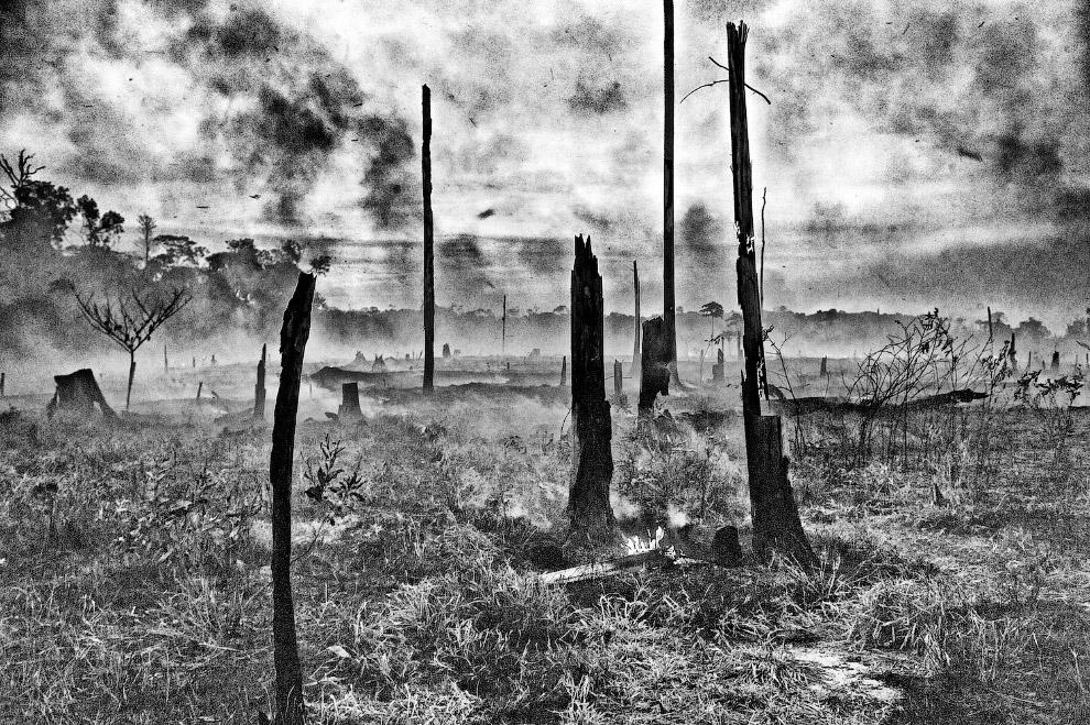 Это тлеющие останки тропического леса Амазонии