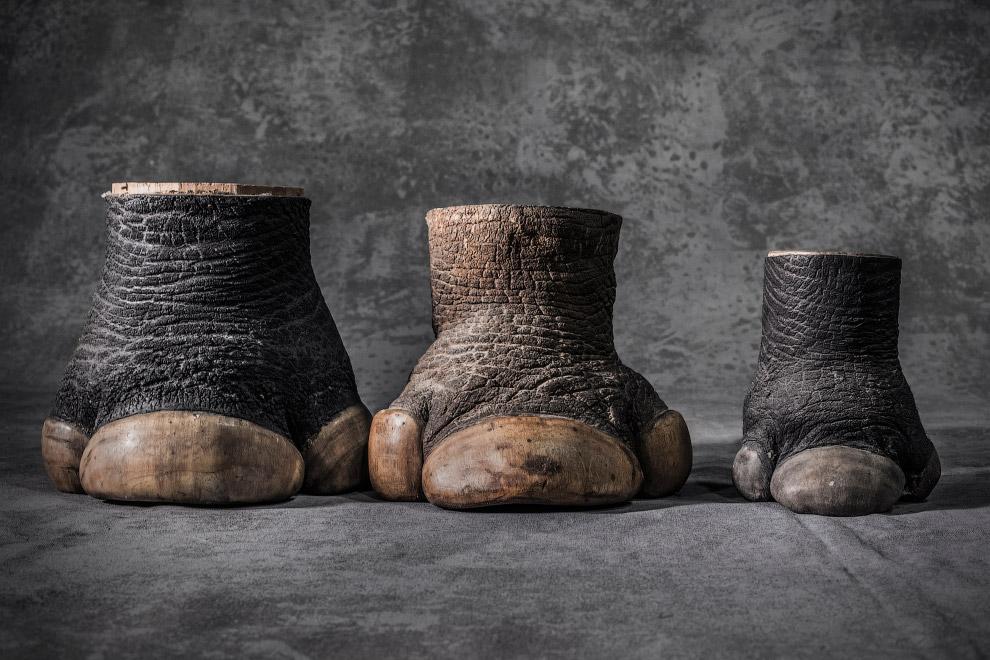 Конфискованные ноги носорогов