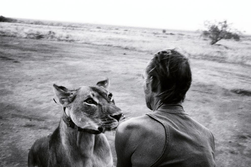 Львы относятся к уязвимым видам