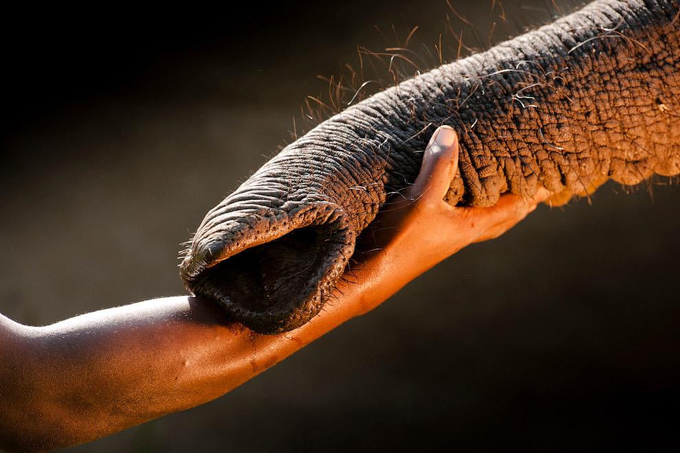 Осиротевший слон