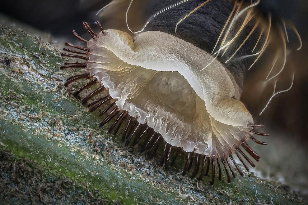 Брюшной отдел гусеницы