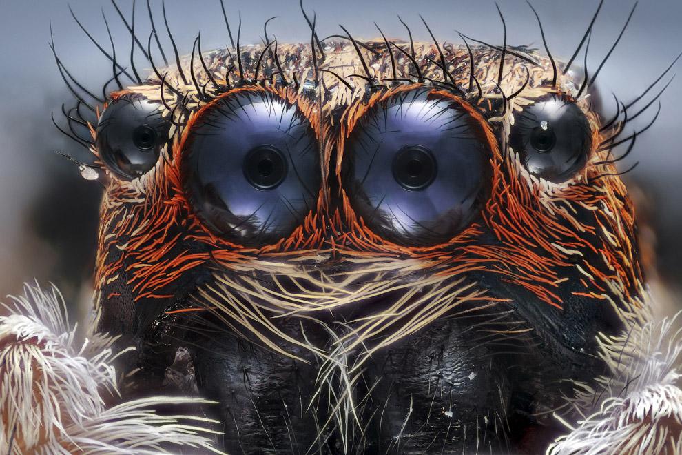 Глаза паучка
