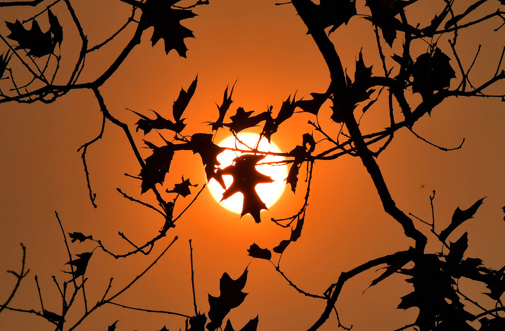 Осенний дуб во Франции