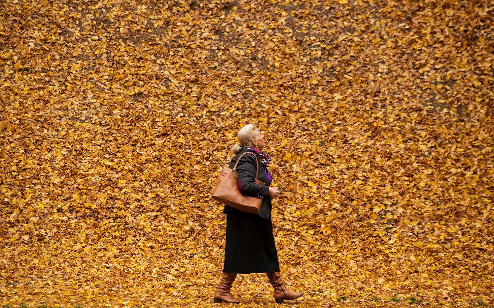Осенние листья в Приштине, Косово