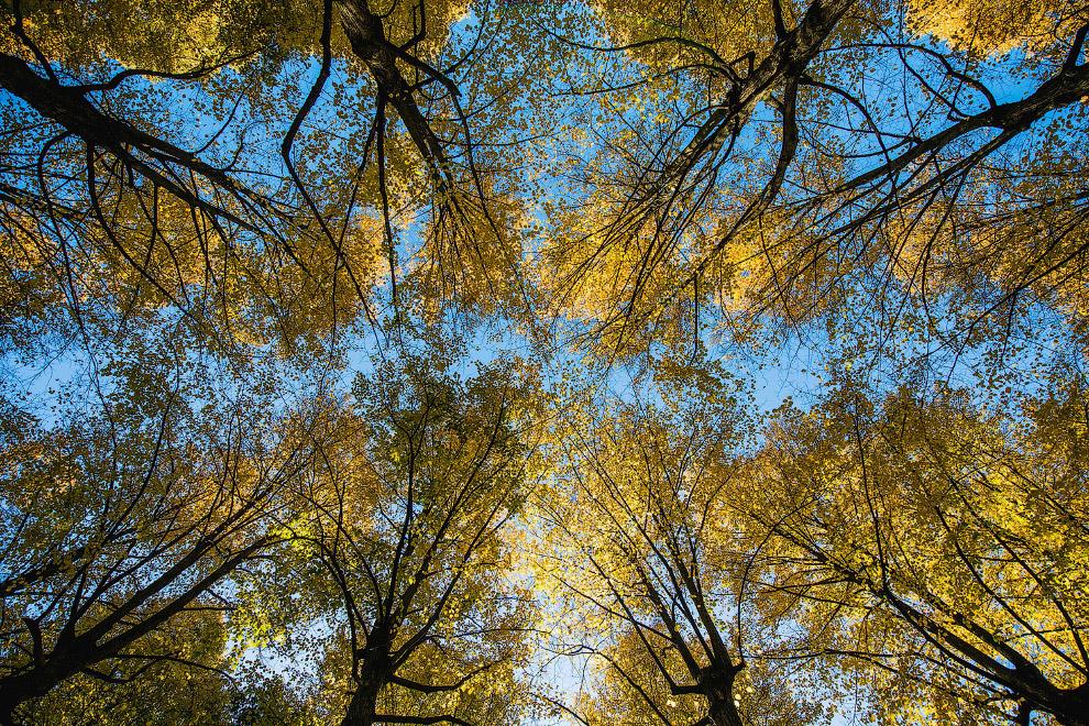 Осенние деревья в Стокгольме, Швеция