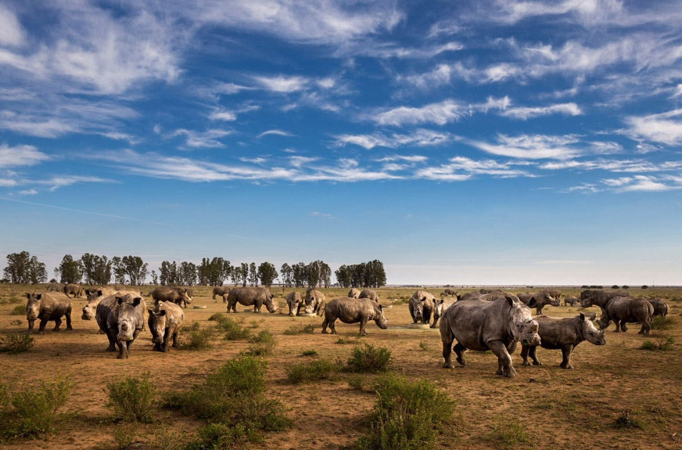 Смертельный бизнес: охота за рогом носорога