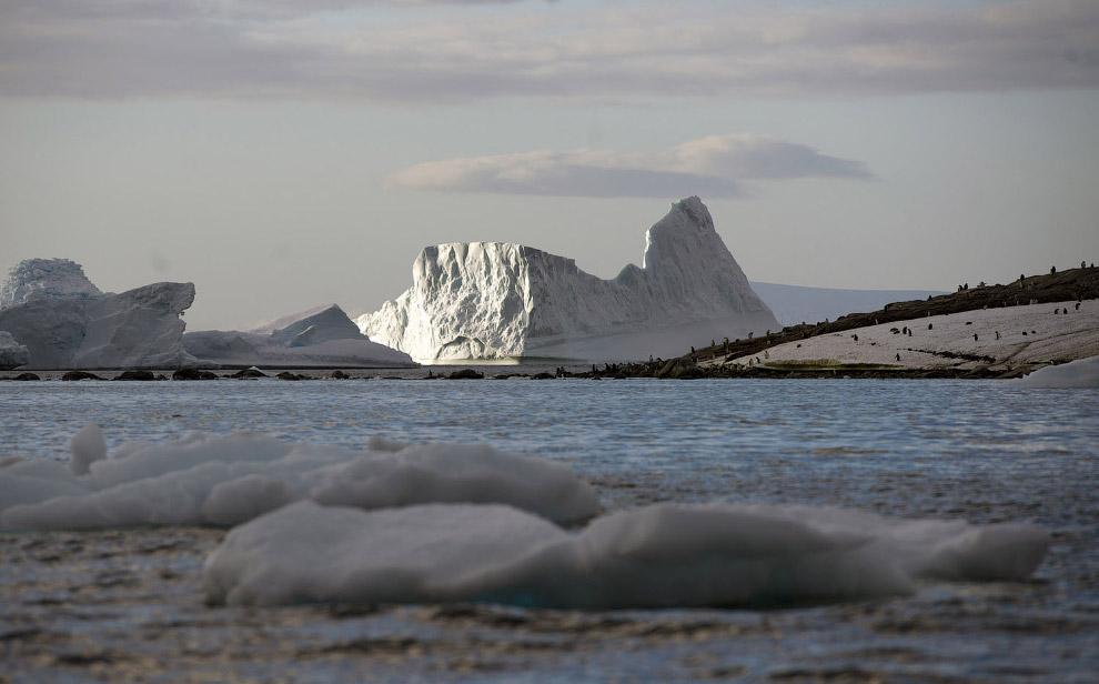 Айсберги на западном Антарктическом полуострове