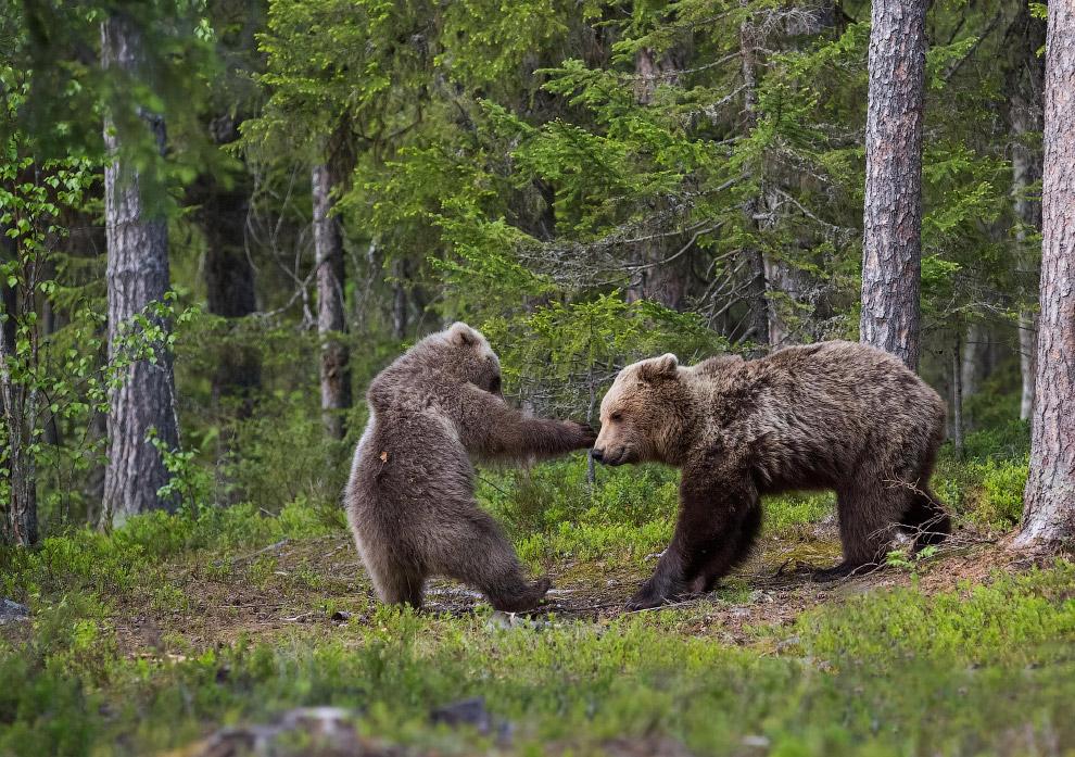 Мама и сынком в лесу в Финляндии