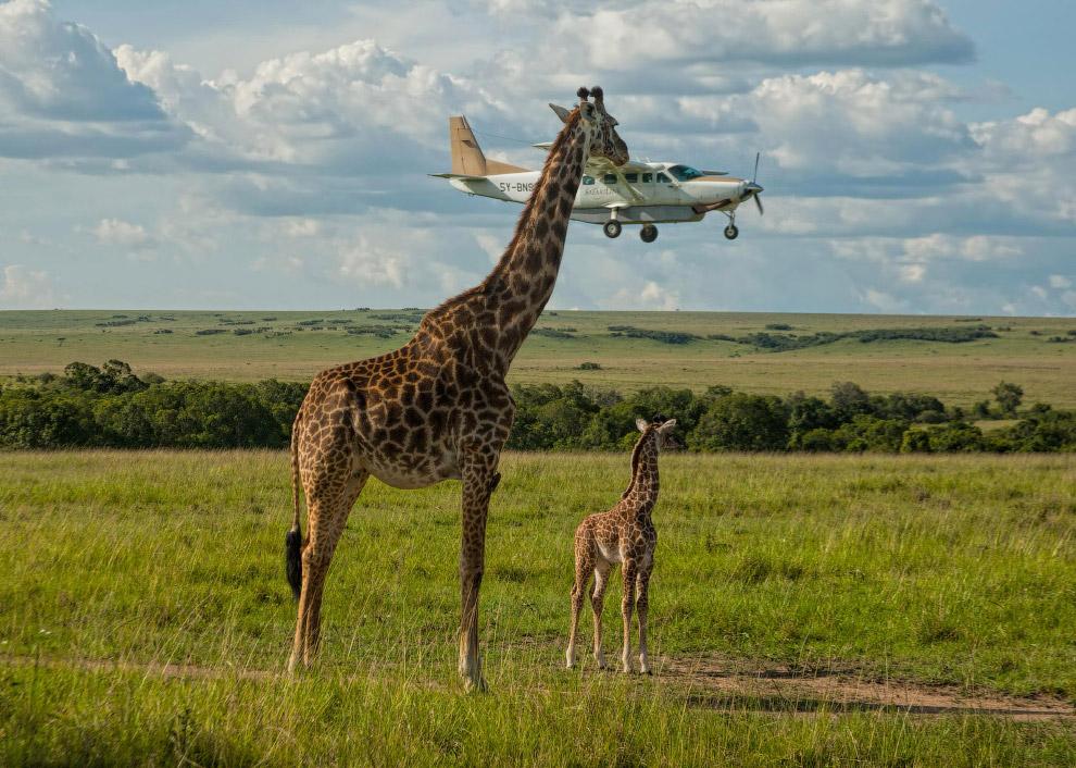 Техобслуживание самолетов