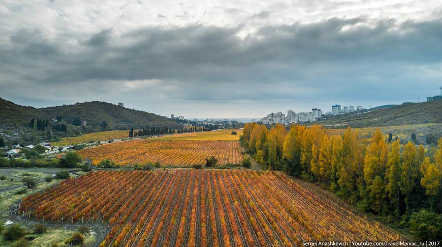 Виноградники Массандры в Алуште