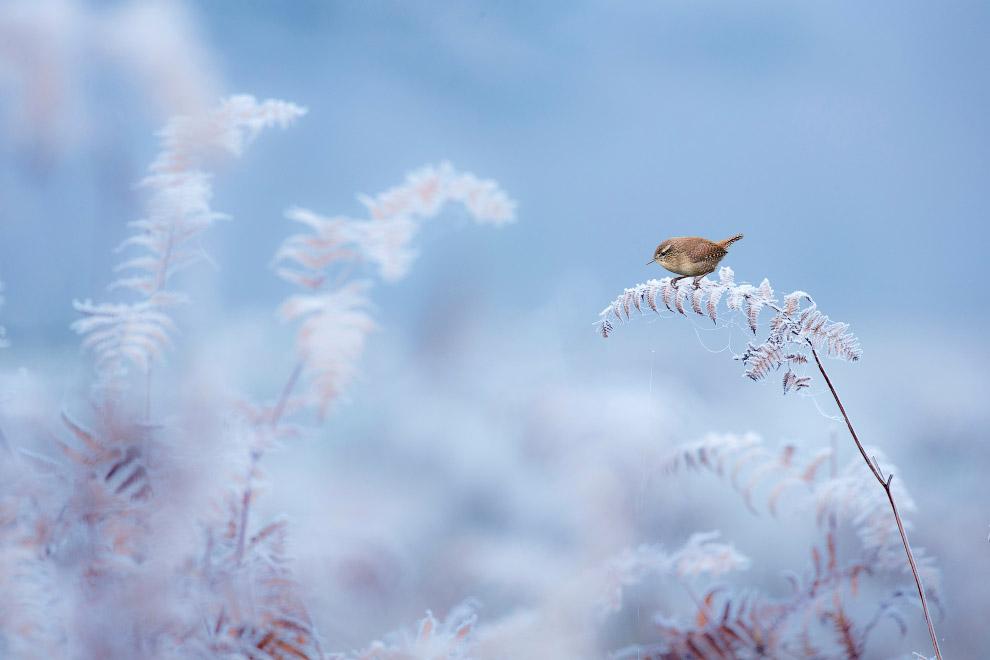 Птица на зимнем папоротнике