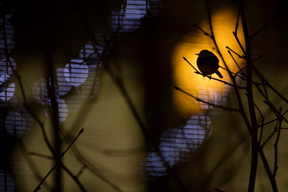 Огни аэропорта Хитроу и птица