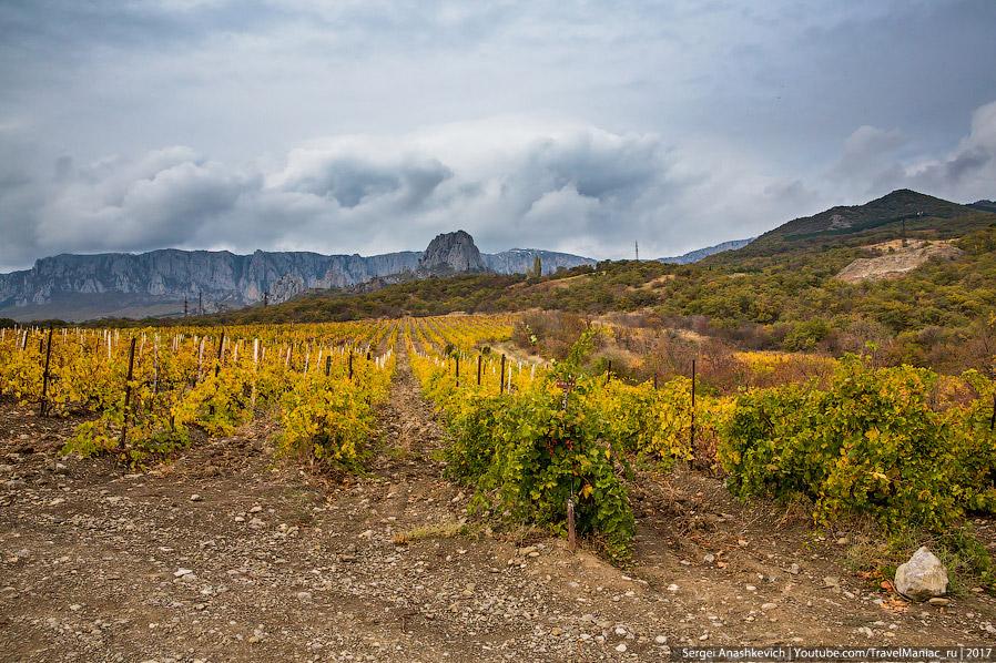 Виноградники в районе Солнечногорского