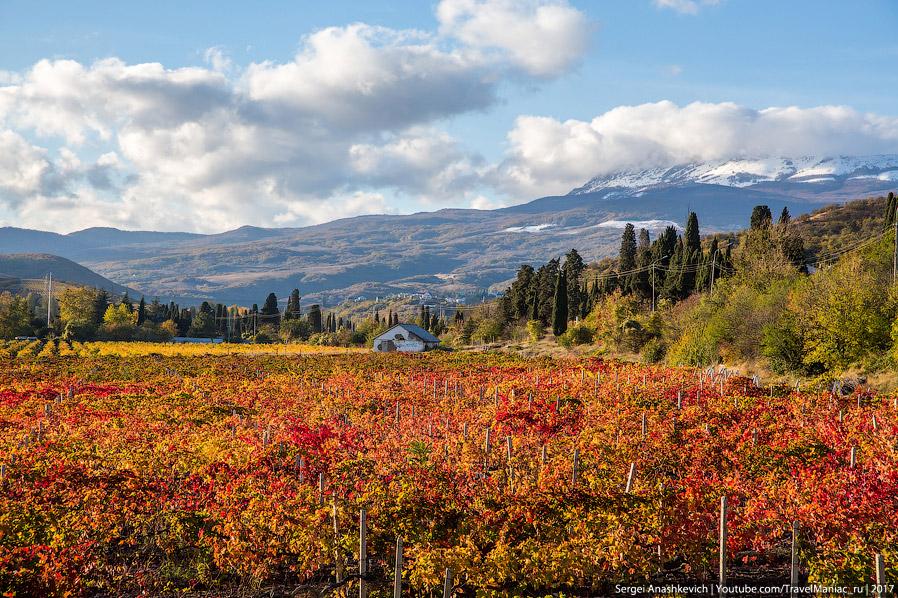 Виноградники под Алуштой и вид на Чатырдаг