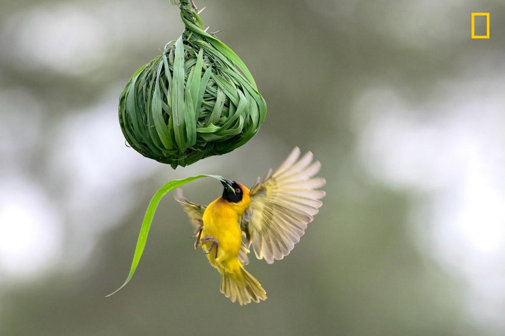 Мастер по созданию гнезда