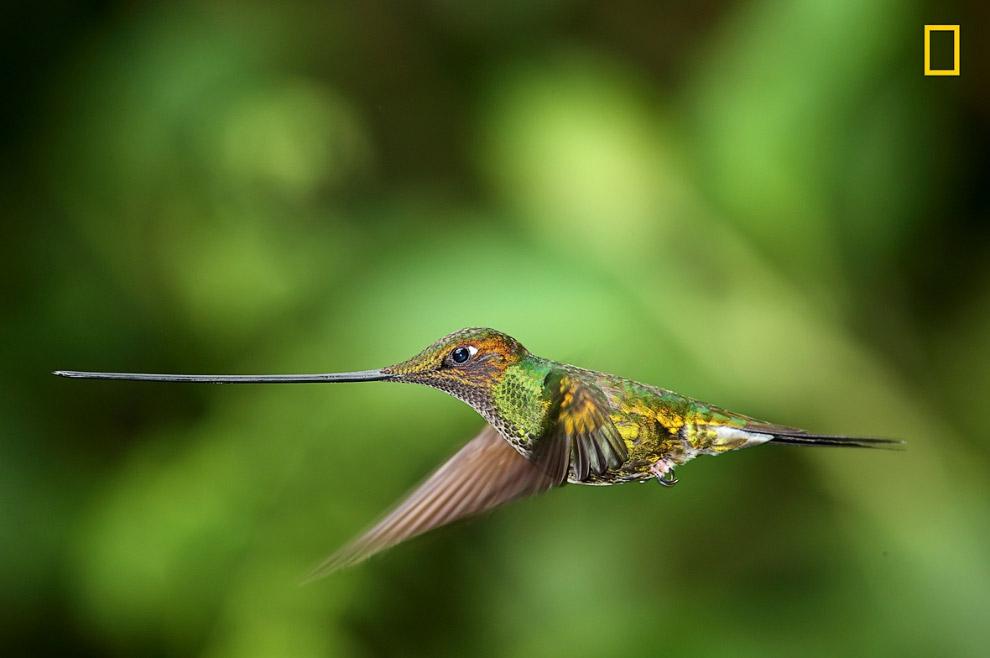 Портрет колибри