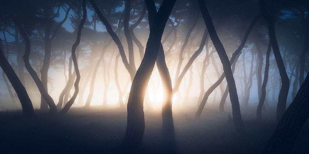 Туман и сосновая роща в Боэне, Южная Корея