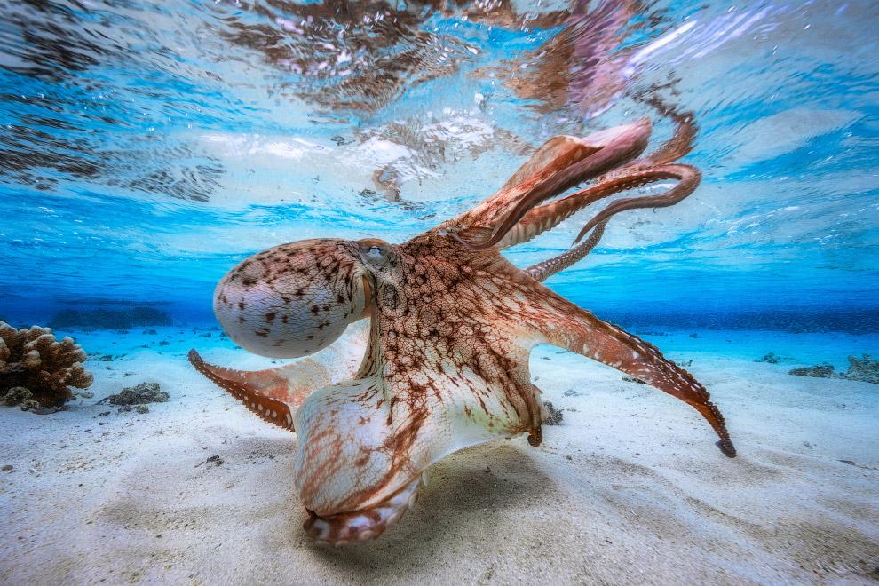 Лучший подводный фотограф года и осьминог