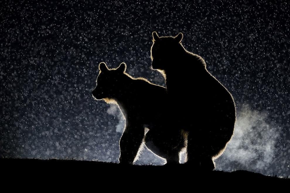 Медвежья романтика