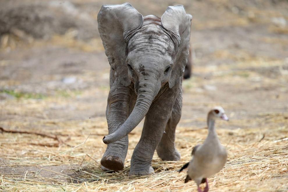 Догоняшки с маленьким слоном
