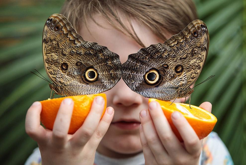 В музее бабочек