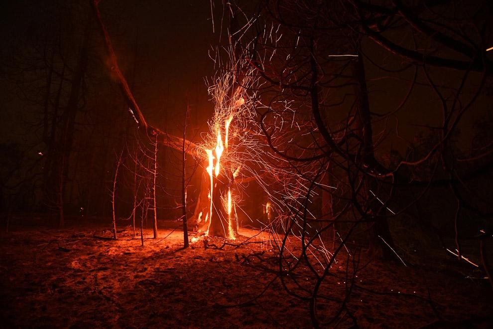 А в Калифорнии всё продолжались лесные пожары