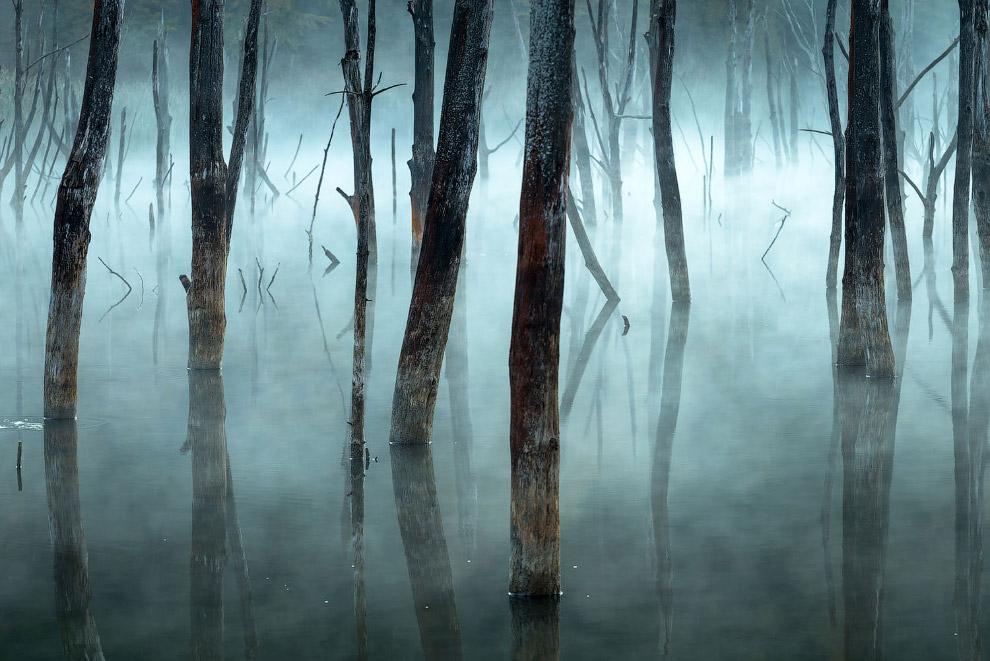 Утренний туман и мертвые деревья в румынском озере Куйдель
